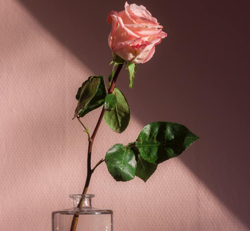 rose for love candle spells